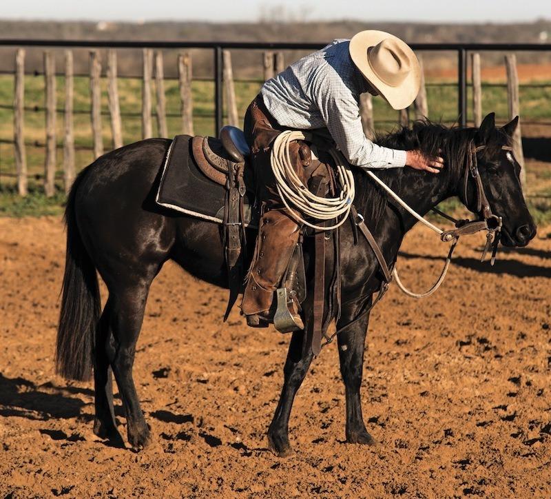 praising horse