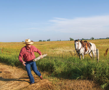 ranch work Thoroughbreds