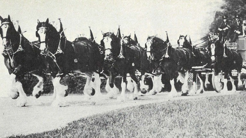 Budweiser-Clydesdales-Flashback