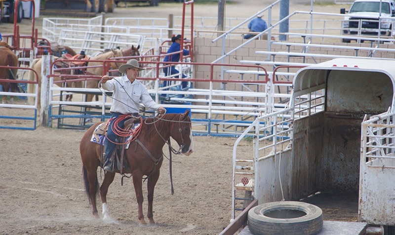 A consigned ranch horse drags a tire on the of a rope into the trailer at the Legacy Ranch Horse Sale.