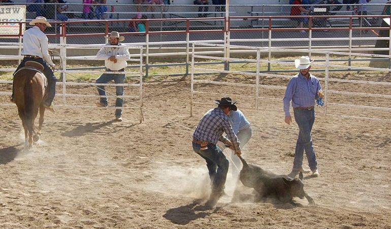 Cowboys demonstrated the ranch horses' skills in the branding corral.