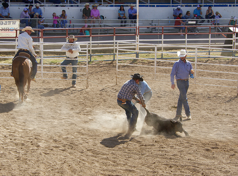Cowboys demonstrated the ranch horses' skills in the branding corral at the Legacy Ranch Horse Sale.