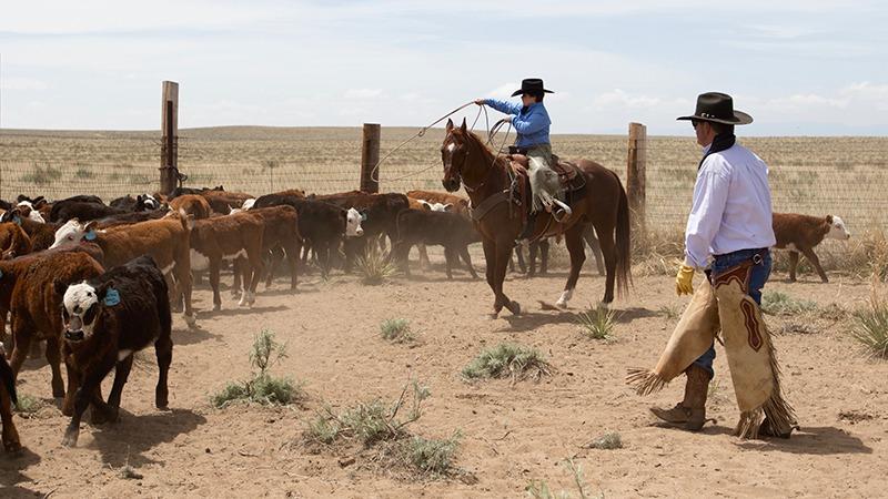 Rhett Norris ropes his first calf.