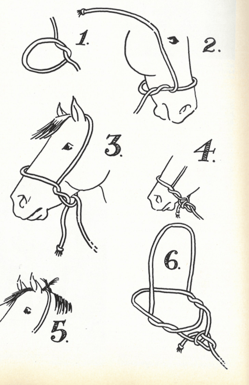 Tying a halter on a horse illustration