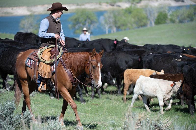 saddle and saddle pad