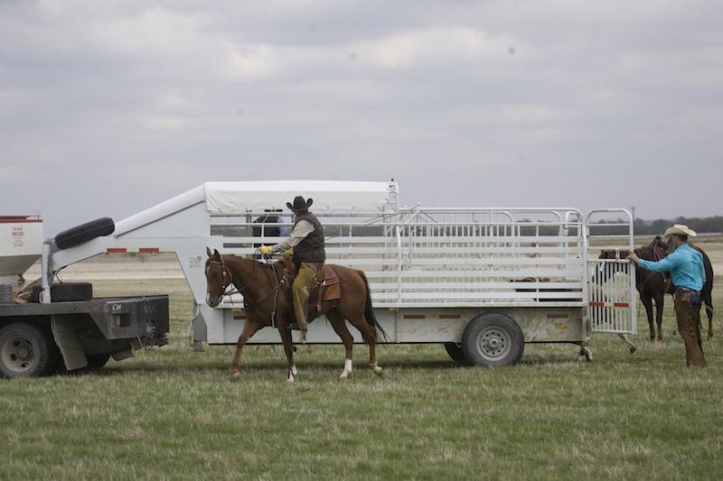 cowboys loading a half top stock trailer