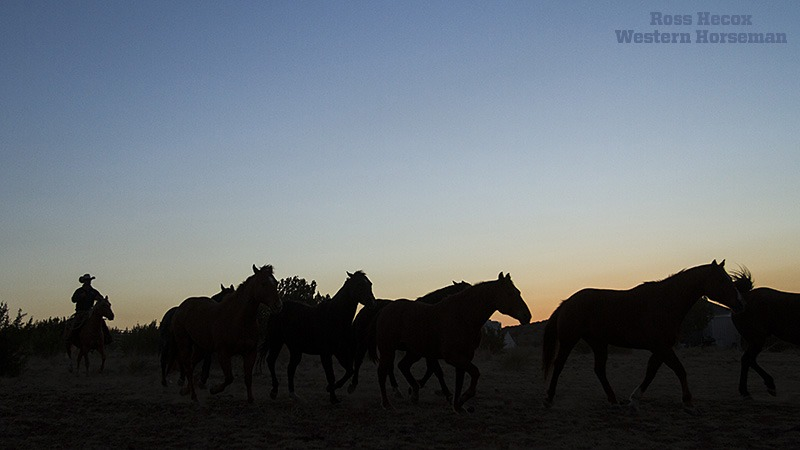 sunrise horse silhouette