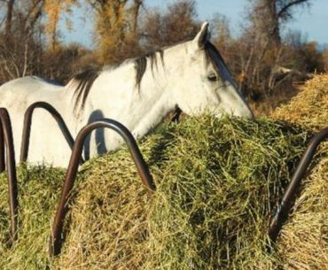 horse eating round bale of hay