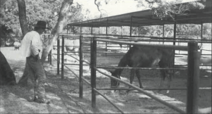 Tommy Lee standing by horse pen
