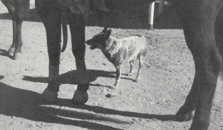 three-legged dog standing under horse
