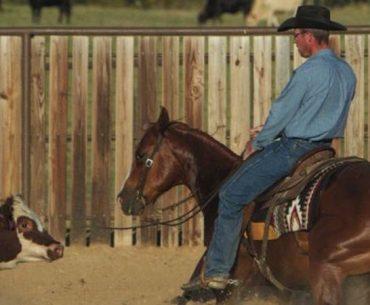 James Payne cutting a cow