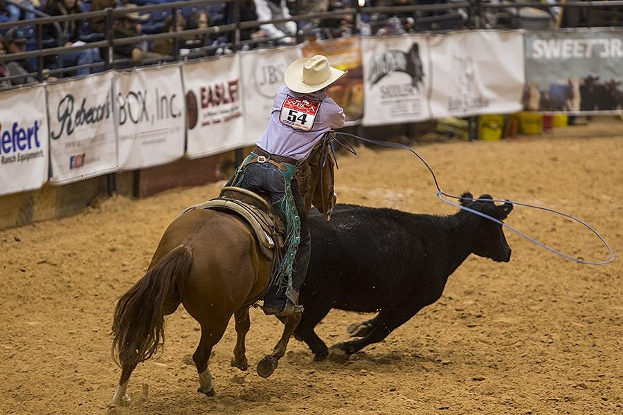 ranch cowboy roping a cow