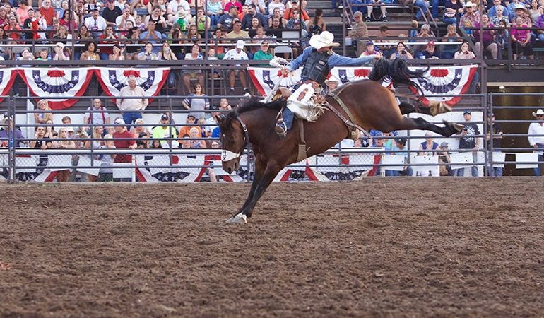Sankey Pro Rodeo bucking horses in the Bucking Horse Breeders Association.