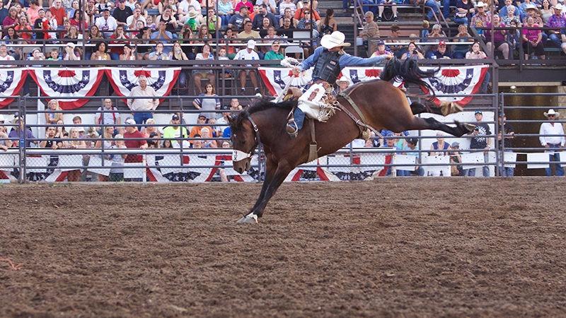 Sankey Pro Rodeo bucking horses in the Bucking Horse Breeders Association.