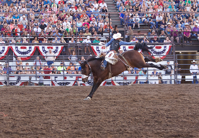 bucking horse from Sankey Rodeo