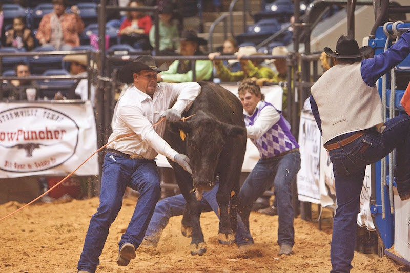 wild cow milking at the ranch rodeo