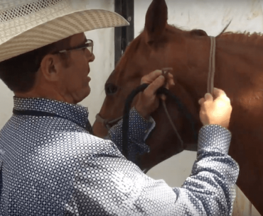 Warwick Schiller showing how to tie a rope halter