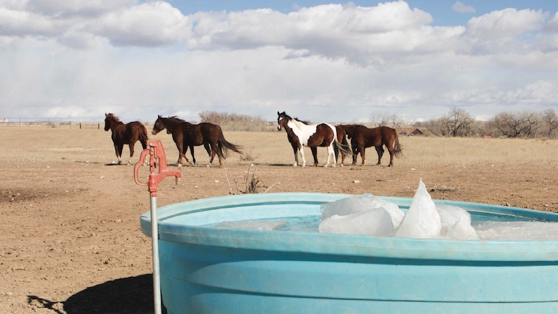 horses standing by watering trough in the winter
