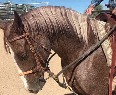 horse with martingale