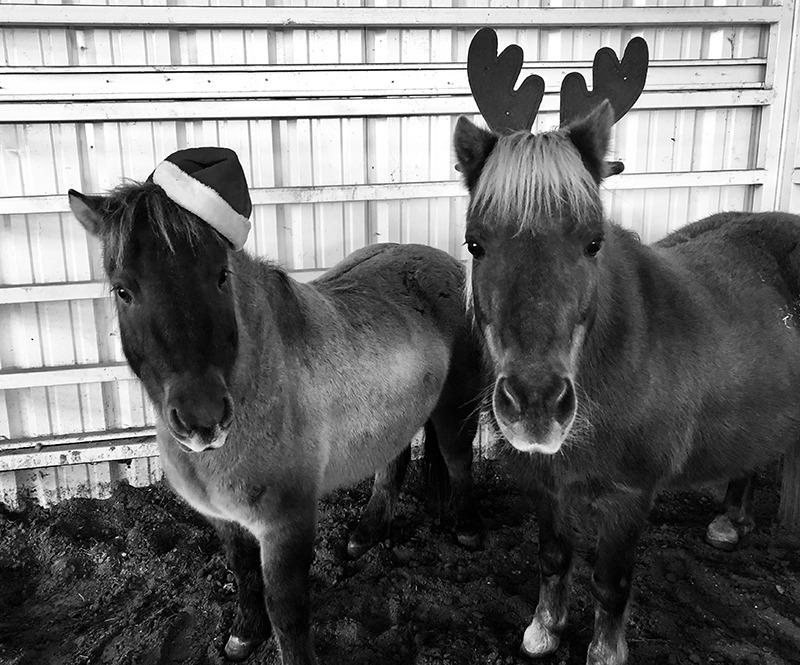 horses wearing santa hat and antlers