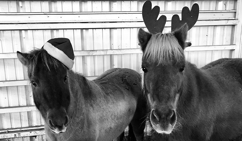 miniature horses wearing antlers and santa hat