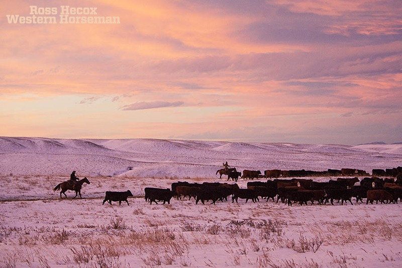 Montana sunrise at the IX Ranch