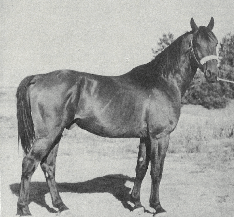 Stallion named hero confirmation shot