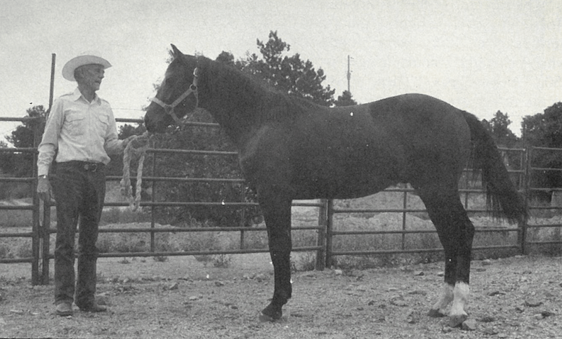 Hugh Nevins standing with stud colt Rodeo