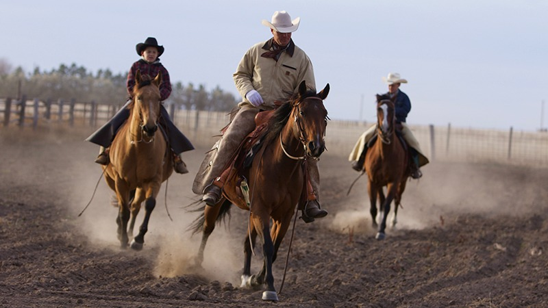 Roy Gillham riding horses with sons at clinci