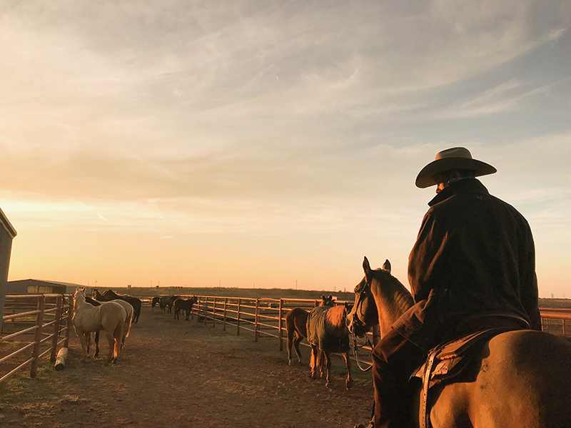 Ben Baldus riding horse to start colts at Waggoner ranch