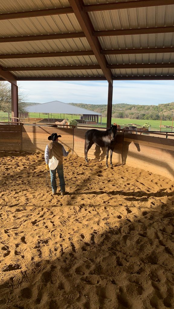 booger brown starts colt in roundpen
