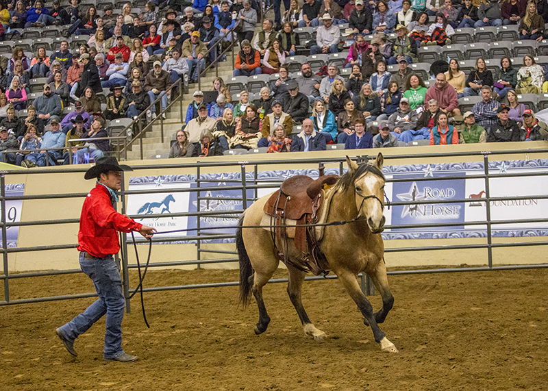 Booger Brown works with Four Sixes buckskin colt in roundpen