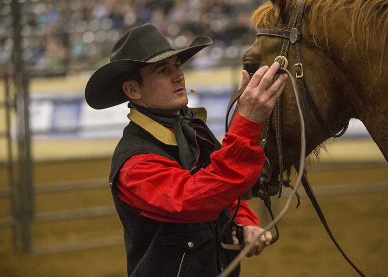 Wade Black puts headstall on Four Sixes colt