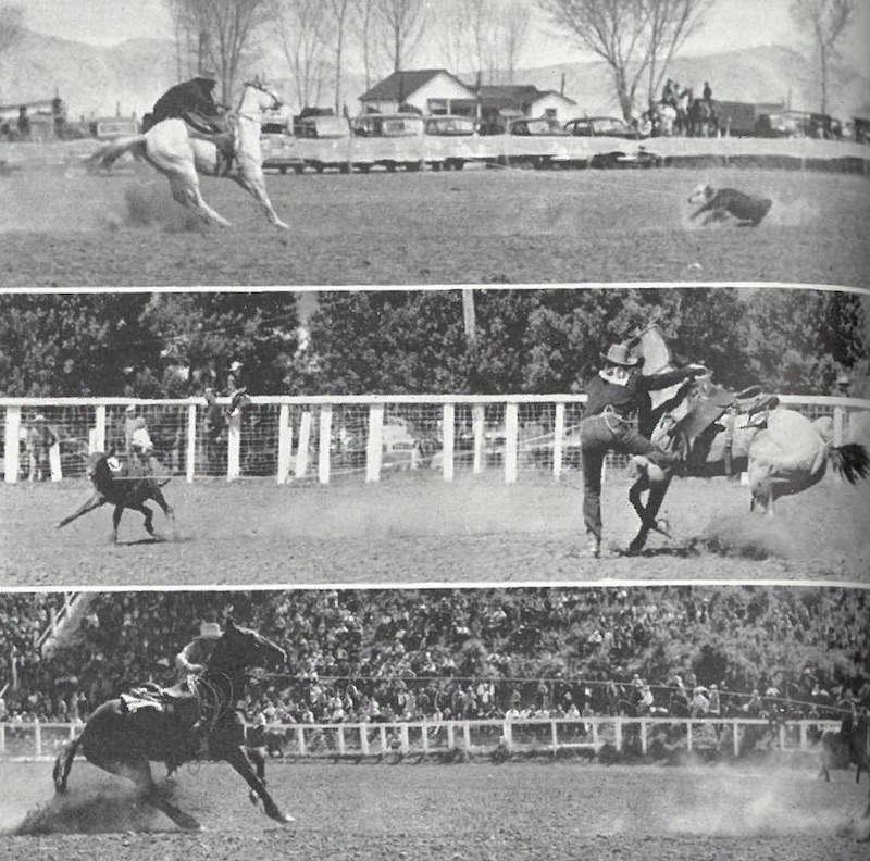 Three calf roping flashback pictures