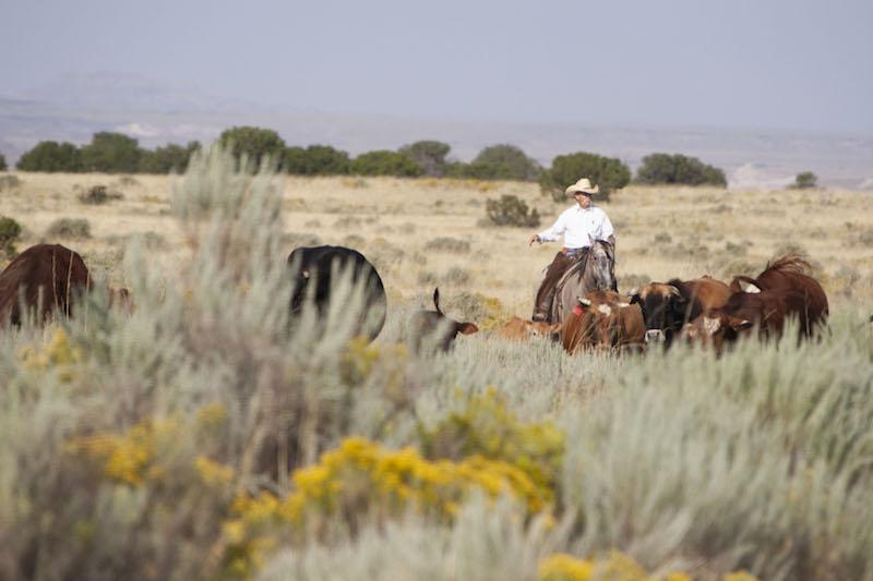 Jerry Winn riding through pushing cattle
