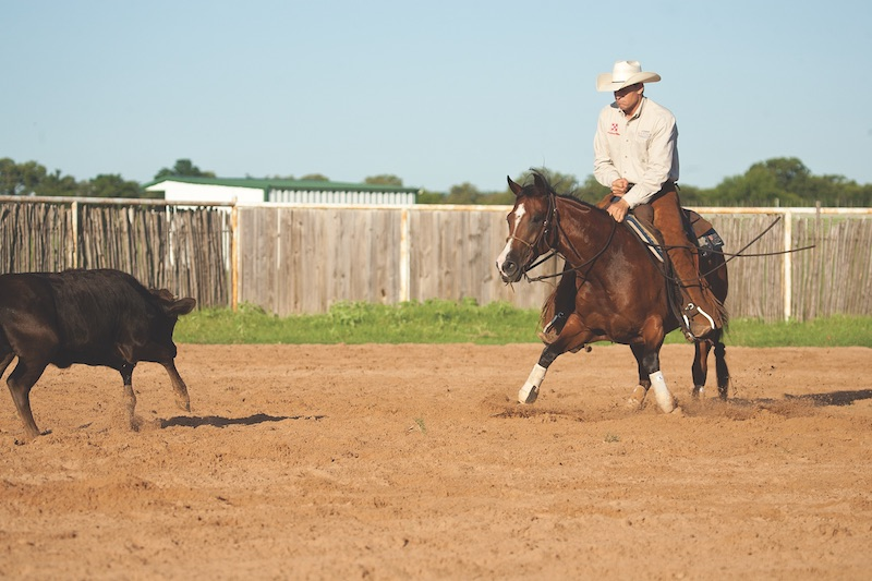 Kory Pounds working a horse with a calf