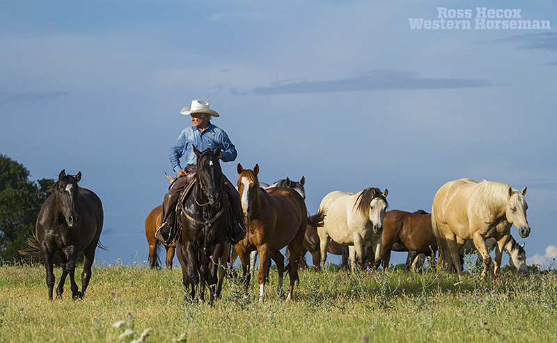 Larry Mahan riding horse through his mare herd