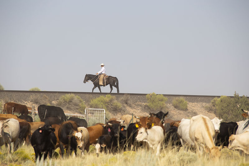 Henson Winn monitors the cattle's steady progress over the tracks, all while keeping an eye on the horizon.