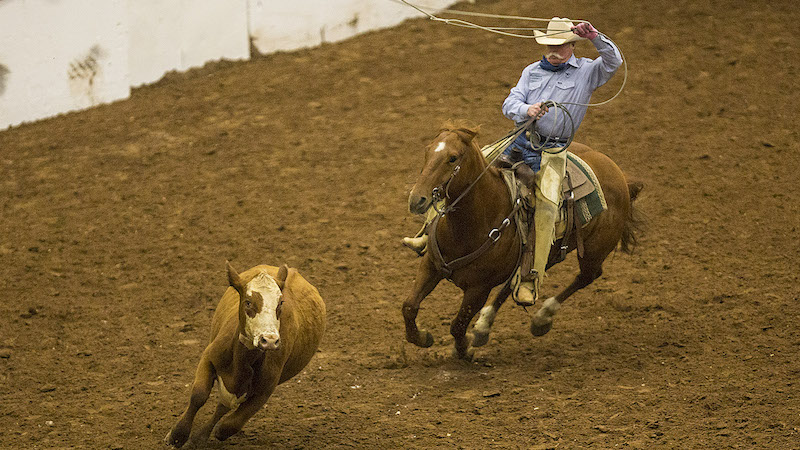 Craig Haythorn roping a yearling off the top horse from the Western Heritage Classic