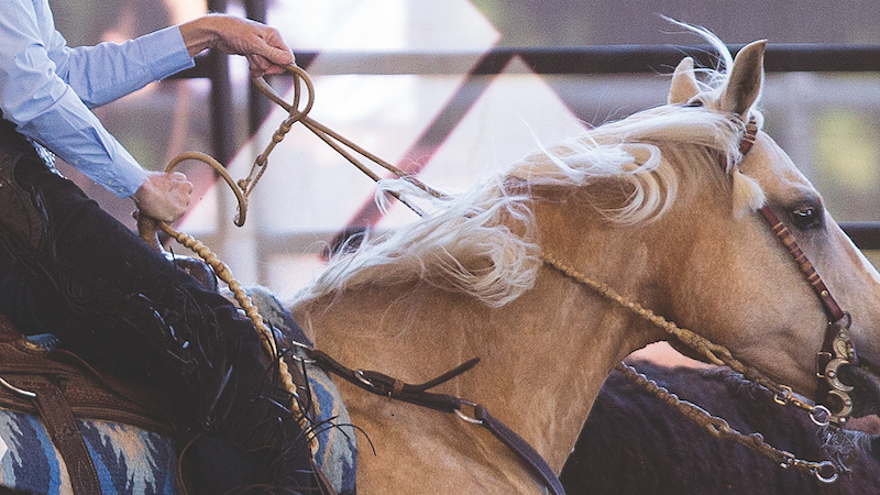 Marilyn Peters demonstrating how to hold romal reins