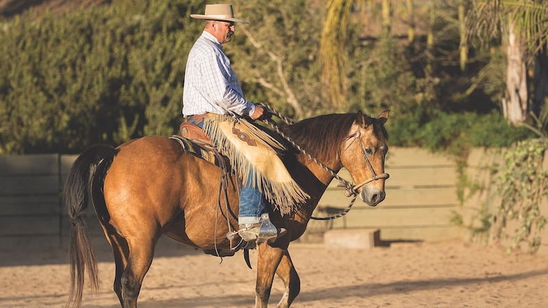 Bruce Sandifer riding a horse demonstrating training with a hackamore