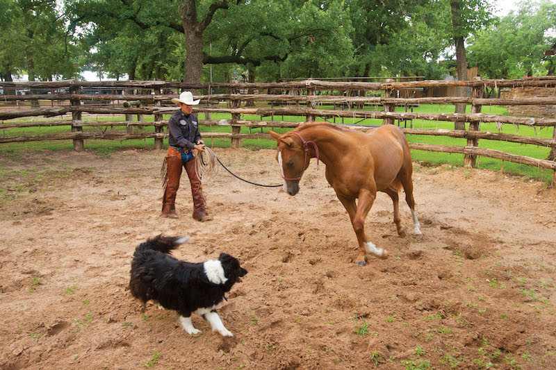 Craig Cameron working with young horse on groundwork