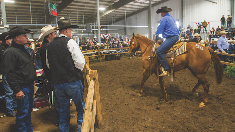 horse in the ring at horse sales