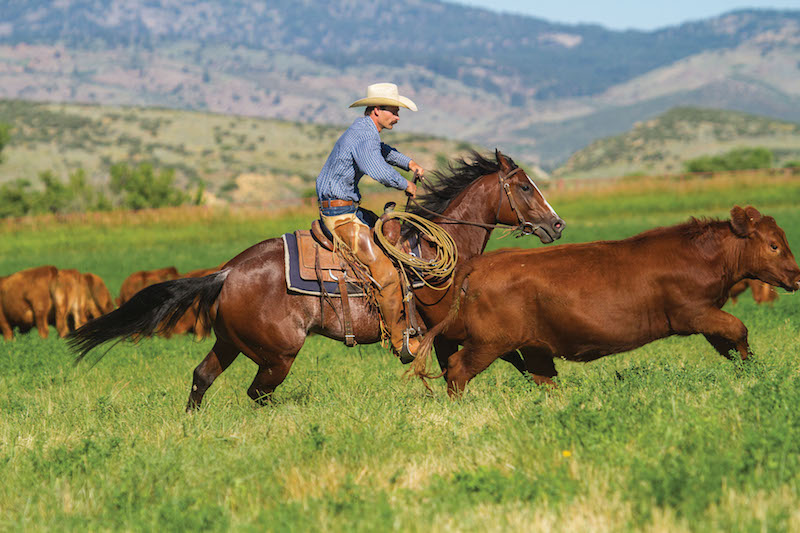 Matt Koch chasing a red heifer back to the herd