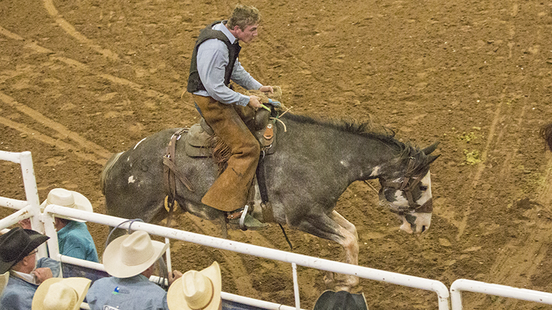 ranch rodeo bronc rider using night latch