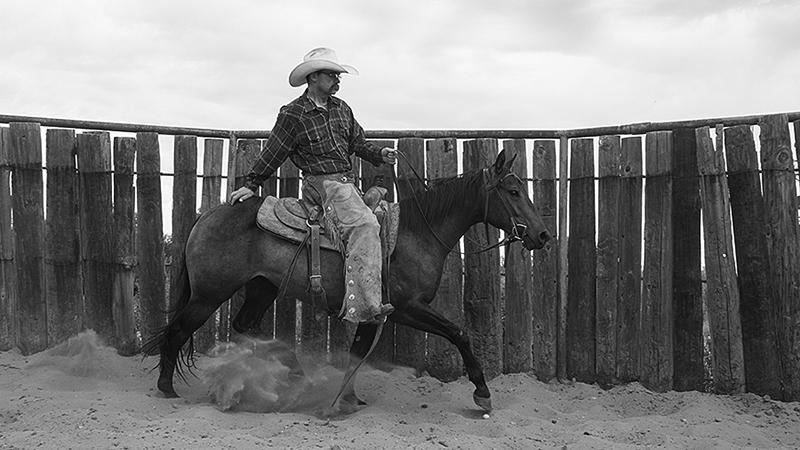 colt trotting in roundpen
