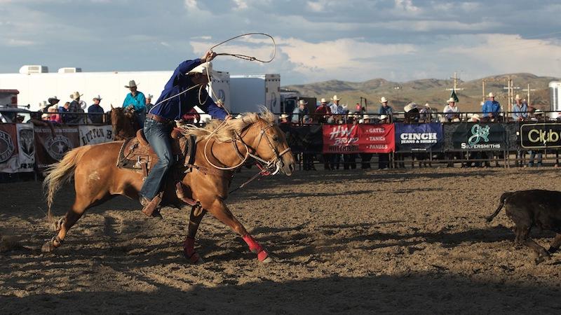 calf roper roping calf at rodeo