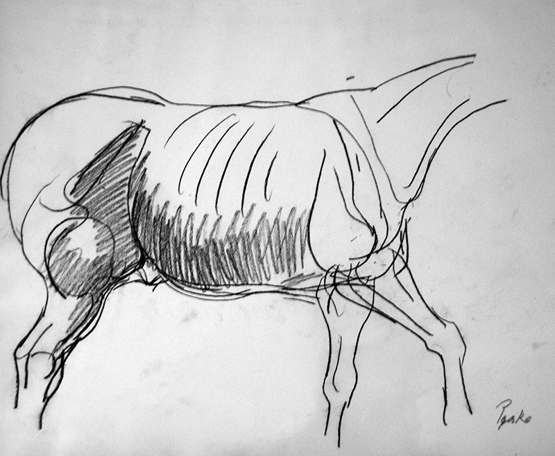Peake's drawing of a horse body