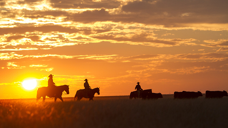silhouette cowboys riding on Hitch Ranch