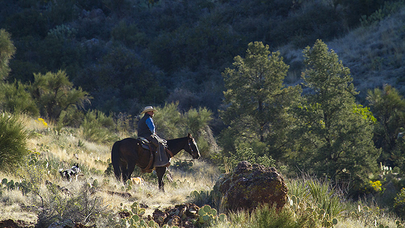 horse and cowboy riding in a rock canyon
